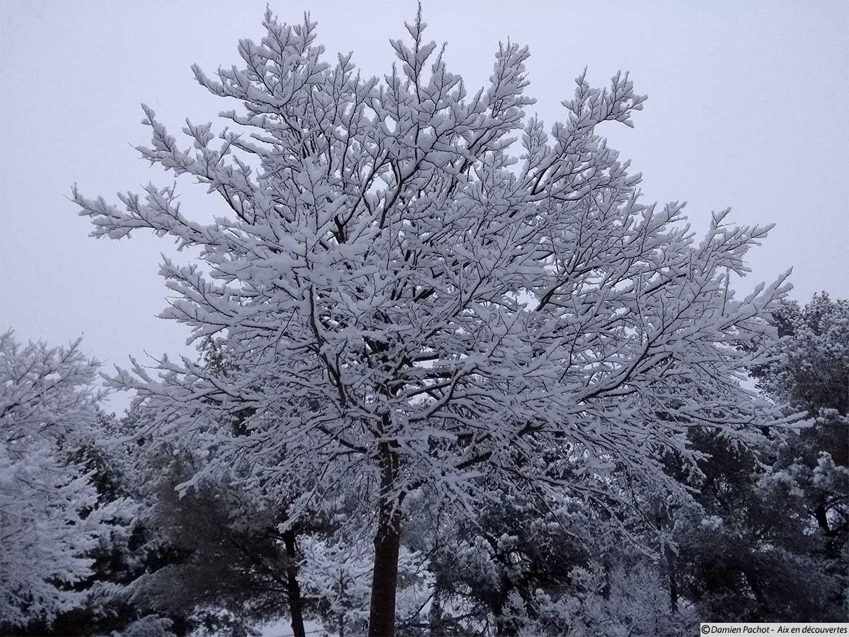 Un arbre enneigé lui aussi