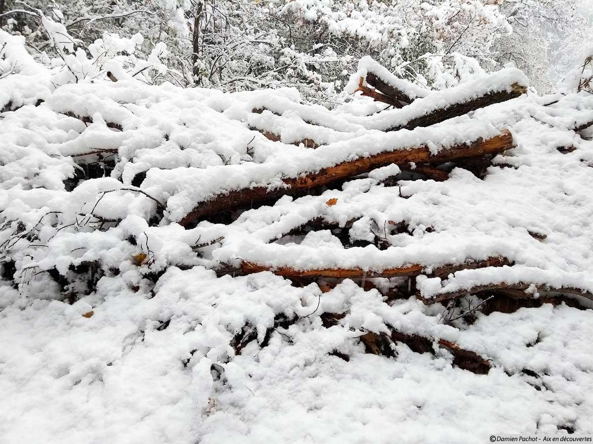 Un tas de bois bien joli avec de la neige dessus